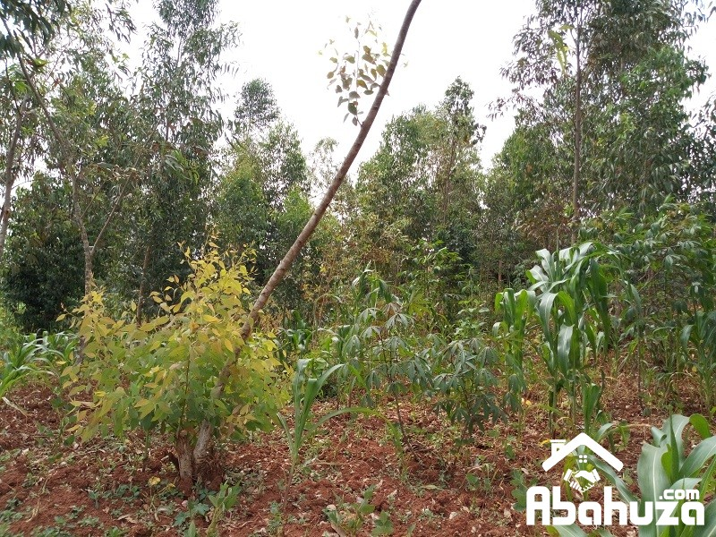 A PLOT OF LOW PRICE FOR SALE IN KIGALI AT BUSANZA