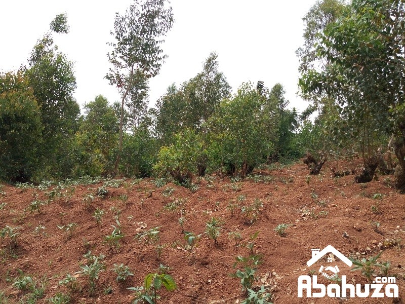 A VERY CHEAP AND GOOD PLOT TO SELL IN KIGALI AT BUSANZA