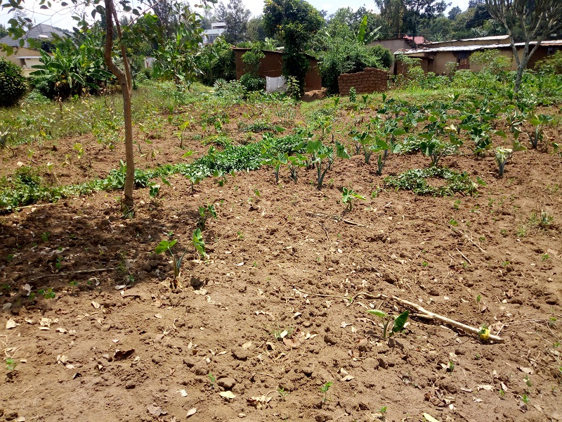 A VERY NICE AND BIG PLOT FOR SALE AT KINYINYA