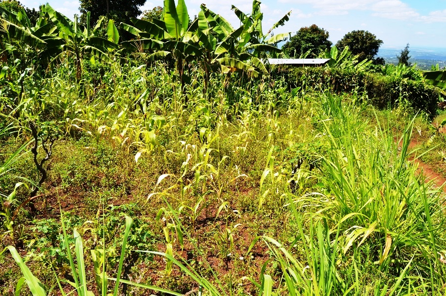 A PLOT FOR SALE AT KICUKIRO