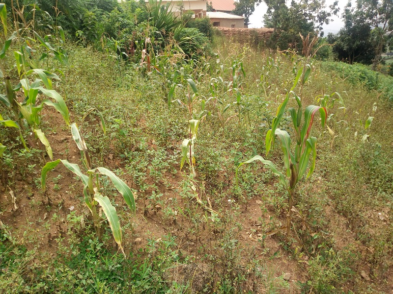 A NICE PLOT FOR SALE AT KIBAGABAGA