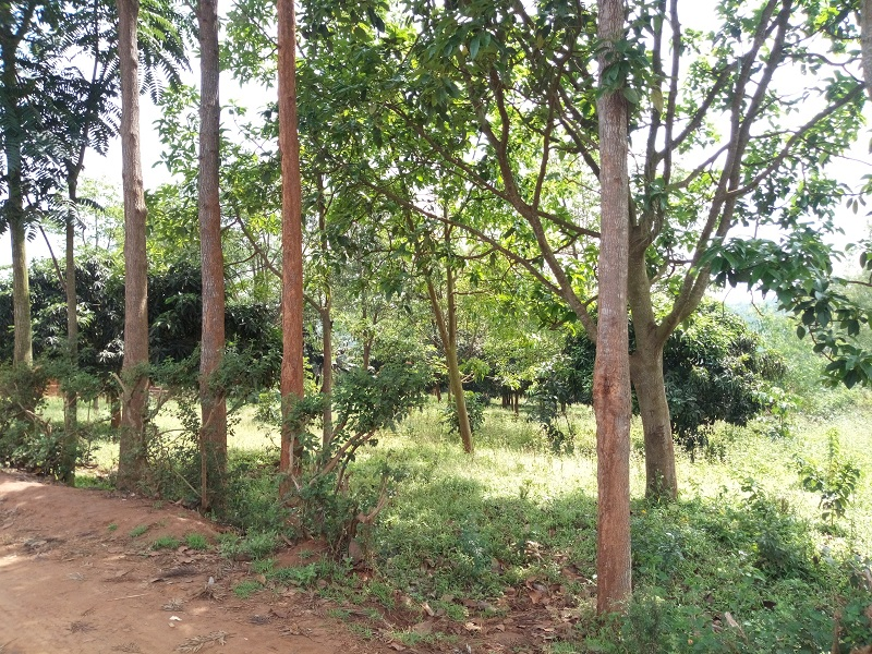 A VERY BIG PLOT FOR SALE AT KANOMBE