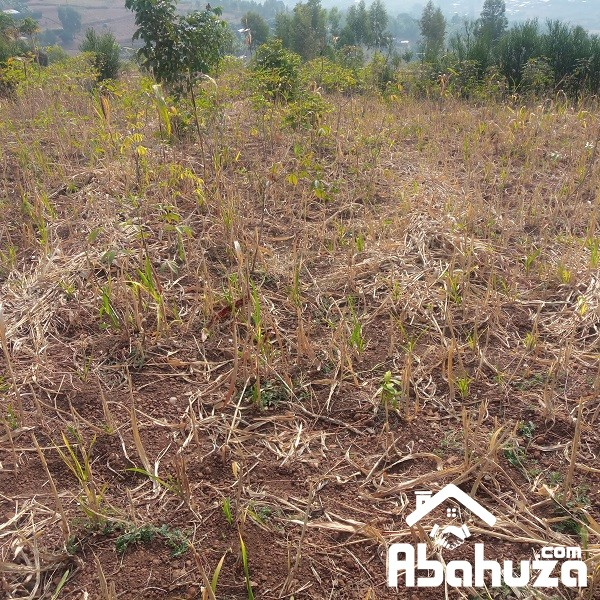 A RESIDENTIAL PLOT FOR SALE AT NYABIKENKE [Rwf 5,500,000≈ $5,729]