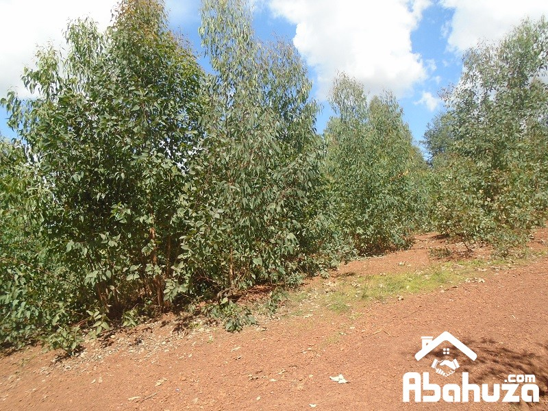 A  NICE PLOT FOR SALE AT KIGALI - Muganza