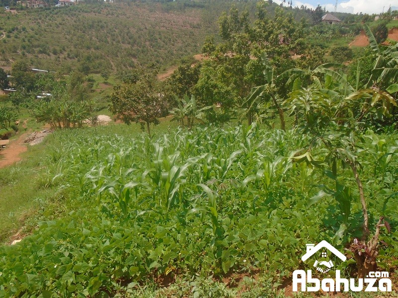 A RESIDENTIAL PLOT FOR SALE AT REBERO IN BISAMBU SITE