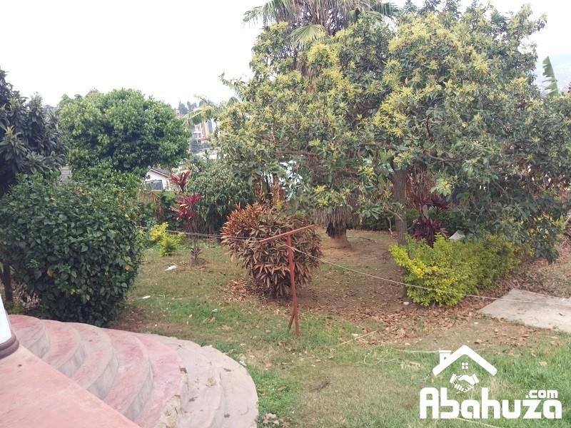 9. Garden