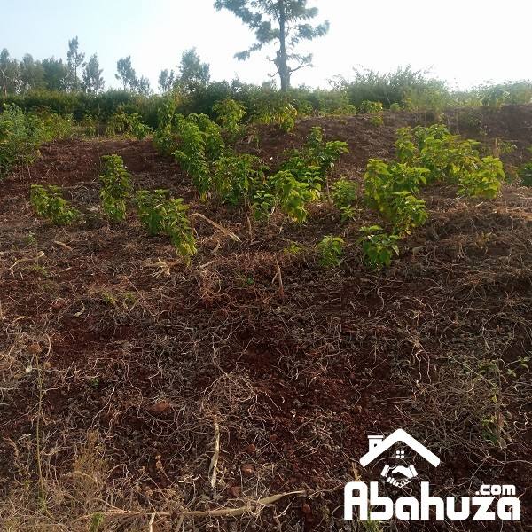A RESIDENTIAL PLOT FOR SALE AT NYABIKENKE
